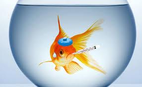 Water temperature in your aquarium (It's pretty darn important!)
